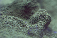 Hard coral macro on night dive light Royalty Free Stock Images