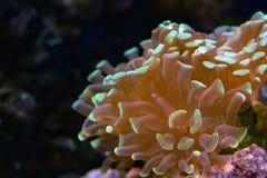 Hard coral macro on night dive light Royalty Free Stock Photos