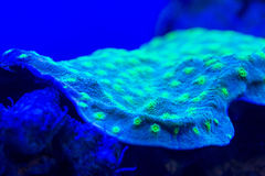 Hard coral macro on night dive light Royalty Free Stock Photography