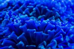 Hard coral macro on night dive light Royalty Free Stock Photo