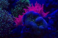 Hard coral macro on night dive light Stock Photos