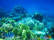 Hard-coral reef stock images