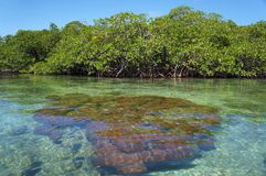 Hard coral in shallow waters Stock Photos