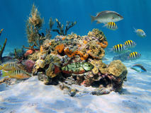 Hard corals in the sea Stock Photography