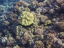 Hard core reef Royalty Free Stock Image