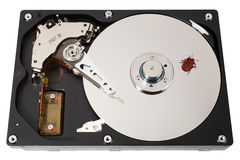 Hard disk, bug, one. The open hard disk with one bug. �oncept of information errors. Isolated on white Royalty Free Stock Photography