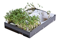 Hard disk drive with Garden Cress Stock Photos