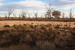 Hard dry land in the drought Stock Photography