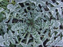 Hard Frost Royalty Free Stock Photography