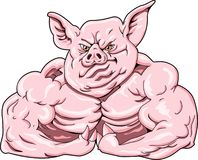 Hard Hog. This is a hard hog showing off his muscles Stock Photo