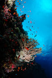Hard koraal royalty-vrije stock fotografie