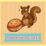 Hard nut to crack Stock Photography