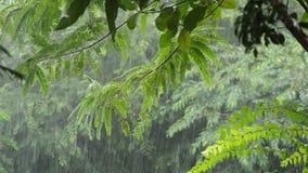 Hard rain falling on tree in garden. Hard rain falling on tree in the garden stock video