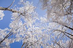 Hard rime in forest Stock Photos