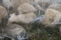 Hard rime, frozen plant winter wonderland scenery. freezing fog and Mist background. moisture forming ice. Hard rime, frozen plant winter wonderland scenery stock photography