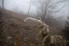 Hard rime, frozen plants wonderland scenery. Fog and Mist background, frozen leaves and flowers. moisture forming ice. Hard rime, frozen plants wonderland stock image