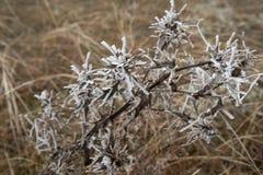 Hard rime, frozen tree winter wonderland scenery. Fog and Mist background, natural tree. frozen leaves, freezing fog. moisture. Hard rime, frozen tree winter royalty free stock photography