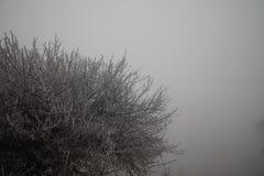 Hard rime, frozen tree winter wonderland scenery. Fog and Mist background, natural tree. frozen leaves, freezing fog. moisture. Hard rime, frozen tree winter royalty free stock images