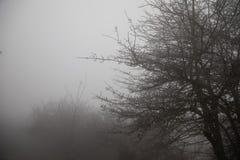 Hard rime, frozen tree winter wonderland scenery. freezing fog and Mist background. moisture forming ice. Hard rime, frozen tree winter wonderland scenery royalty free stock images