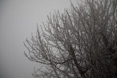 Hard rime, frozen tree winter wonderland scenery. freezing fog and Mist background. moisture forming ice. Hard rime, frozen tree winter wonderland scenery stock photo