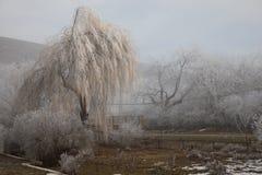 Hard rime, frozen tree winter wonderland scenery. freezing fog and Mist background. moisture forming ice. Hard rime, frozen tree winter wonderland scenery stock photography