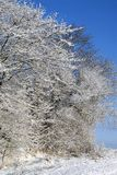 Hard rime ice on trees Royalty Free Stock Photo