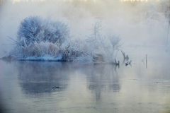 The hard rime of plants in winter fog river Royalty Free Stock Photos