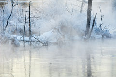 The hard rime of plants in winter river Royalty Free Stock Photos