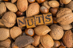 Hard shell nuts Royalty Free Stock Images