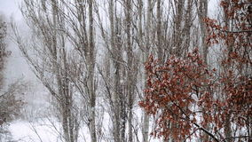 Hard snowfall with big snowflakes slow motion. Video stock video footage