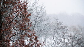 Hard snowfall with big snowflakes slow motion. Video stock video