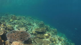 Hard and soft corals. 4k. Colorful reef with healthy hard and soft corals. 4k footage stock footage