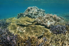 Hard and soft corals underwater reef Pacific ocean Royalty Free Stock Photos