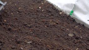 Hard spring gardening. Gardener raking soil with garden tool, spring gardening stock video footage