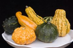 Hard Squash. Arranged on a white plate royalty free stock photography