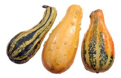 Hard squash Royalty Free Stock Photo