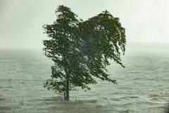 Hard strom raining blowing mangrove tree in sea coast Royalty Free Stock Image