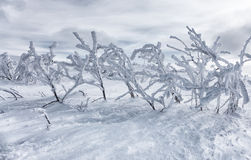 Hard winter in mountains Royalty Free Stock Images