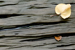 Hard Wood Background with Dried leaves Royalty Free Stock Image