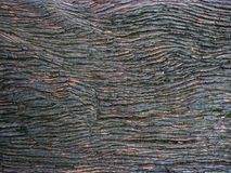 Hard wood for background. Patterns and cracks of hard wood royalty free stock image
