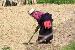 Traditional Tibetan woman hard working lifestyle  Royalty Free Stock Image
