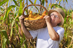 Old person working Stock Photography