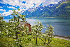 Hardanger fjord in may, Norway royalty free stock photography
