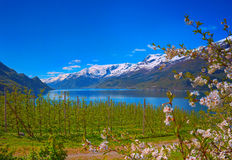 Hardanger fjord w Norwegia Fotografia Royalty Free