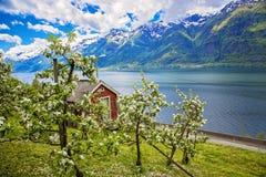 Hardanger fjord wewnątrz może, Norwegia fotografia royalty free