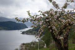 Hardangerfjord στοκ εικόνα με δικαίωμα ελεύθερης χρήσης