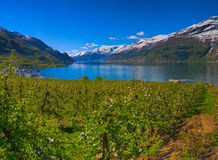 Hardangerfjord in Norway Stock Photography