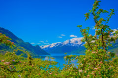 Hardangerfjord in Norway Royalty Free Stock Photos