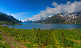 Hardangerfjord in Norway Royalty Free Stock Image