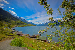 Hardangerfjord in Norway Stock Image